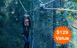 Tree To Tree Aerial Adventure Park's Aerial Obstacle Courses -  Challenge yourself on a series of six obstacle courses set high up in the trees. Each self-guided course contains a sequence of more than 60 obstacles.
