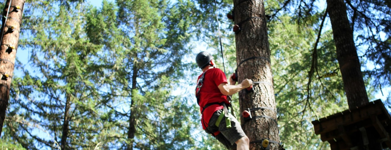 Picture of man climbing a tree - Tree to Tree Adventure Park.